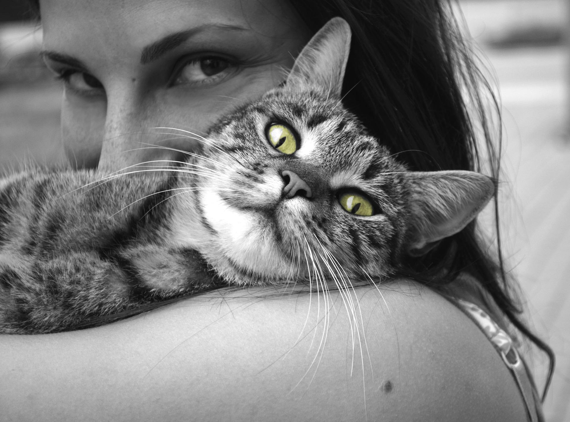 chat grossesse